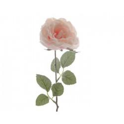 Rosa stelo singolo rosa con neve