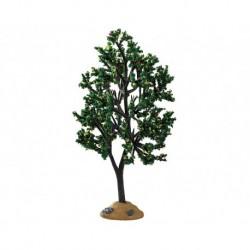 Alder Tree Cod. 94538