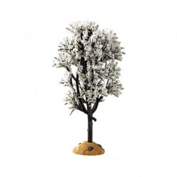 White Hawthorn Tree Cod. 94540