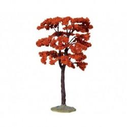 Yellowwood Tree, Large Cod. 44794