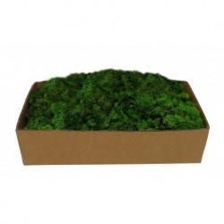 Muschio Lichene Verde 500 gr