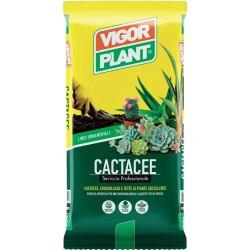 Terriccio Cactacee 5 litri Vigorplant