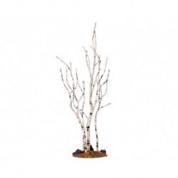 Birch Tree Medium Cod. 34967